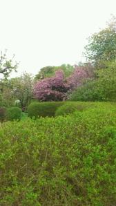 Trädgård 4